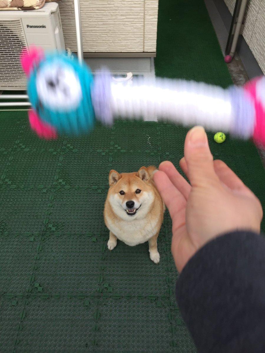 投げるって言ったのにwキャッチできなかった犬の顔が最高ww