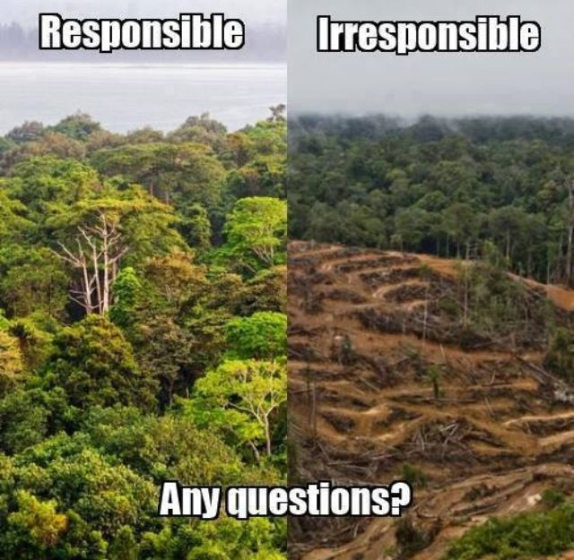 I&#39;m pretty sure nobody at #COP23 wanted to point the finger at Indonesia &amp; deforestation.   Is #Indonesia good at anything? Yes. Proudly destroying rainforests since 1945 &amp; Nr 1 world leader in #deforestation #palmoil - #WonderfulIndonesia <br>http://pic.twitter.com/VcAD53aNRC