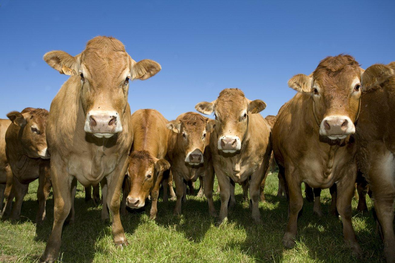 Картинки сельское хозяйство животноводство