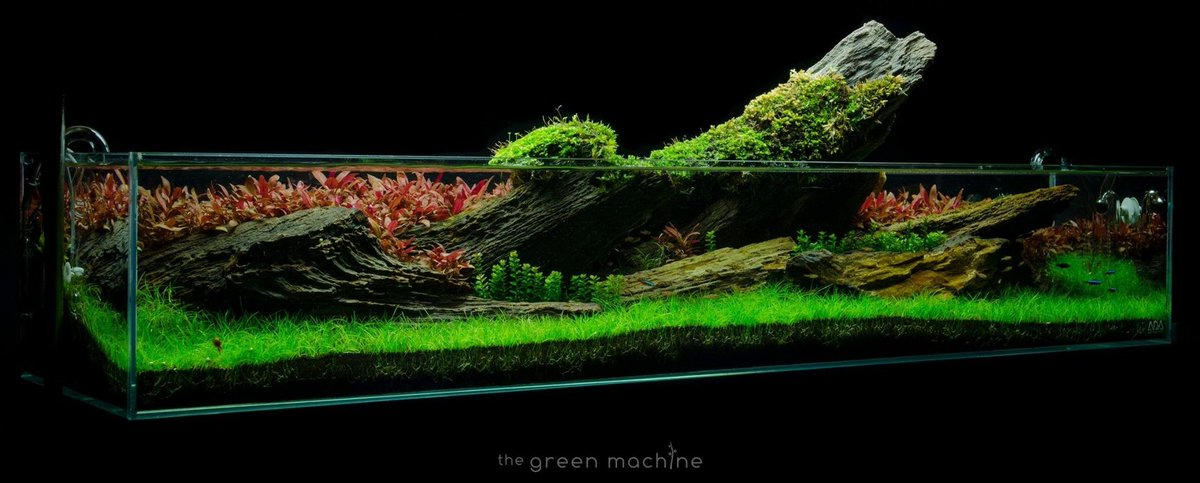 The Green Machine On Twitter Crimson Sky Aquascape By James