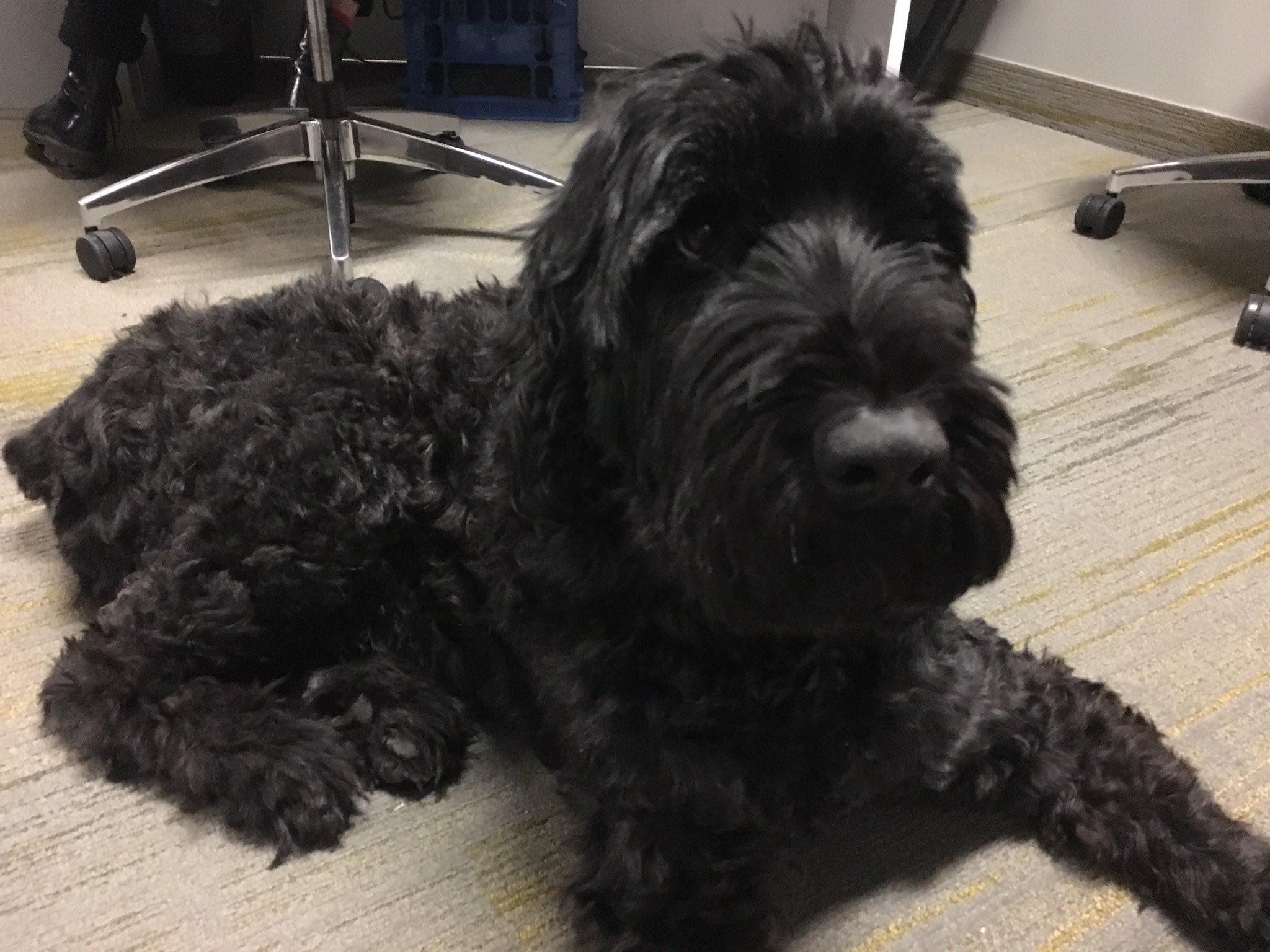 Friendly visitor today at #CodeAcrossTO #dogswhocode #OpenDataDay https://t.co/SAoYLnpKZC