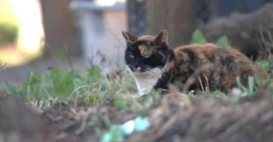 The new Rat Pack...Guardian Angels putting feral #cats to work in NYC