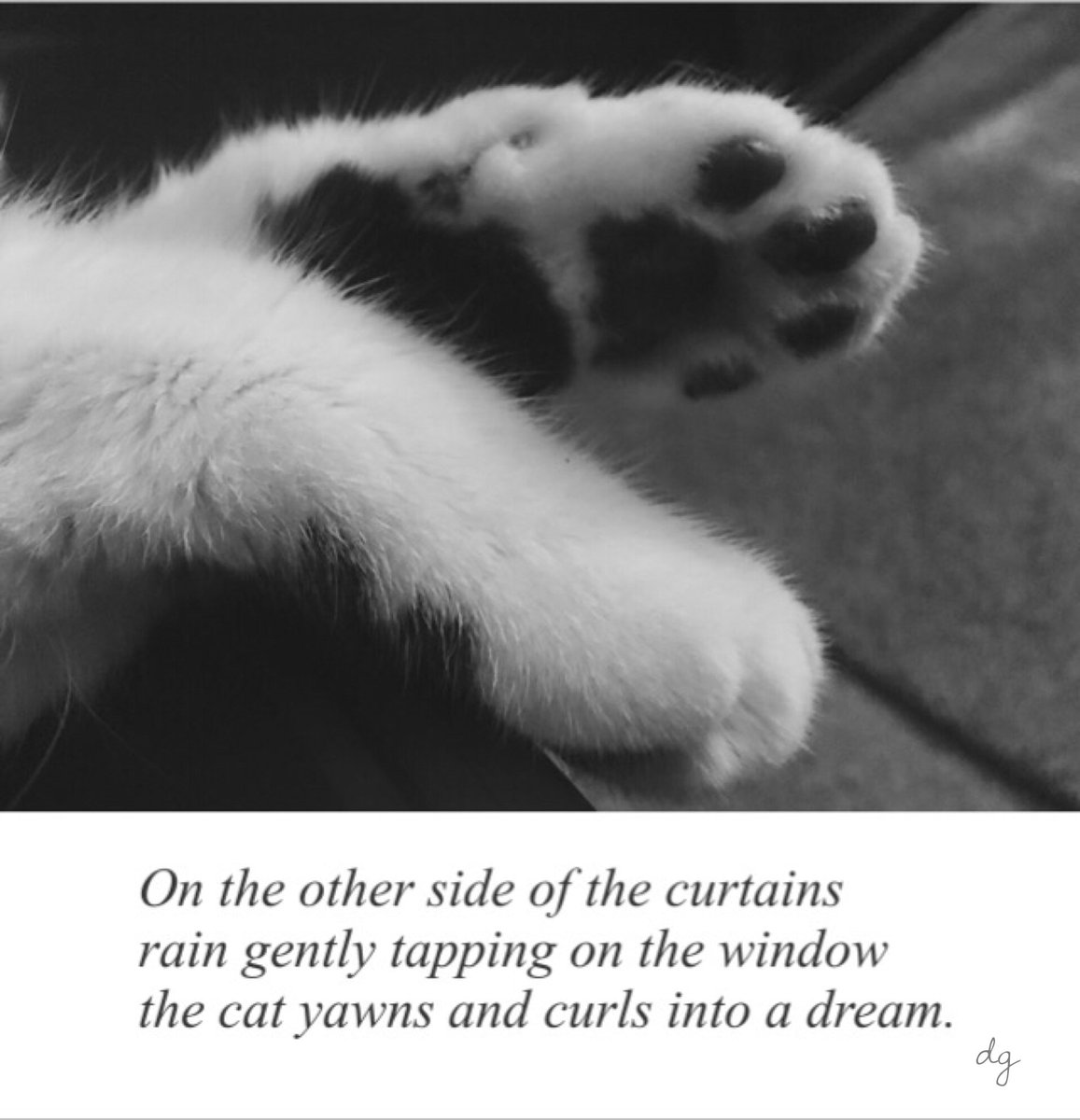 On the other side of the curtains rain gently tapping on the window the cat yawns and curls into a dream. https://t.co/OTcip6Rc4N