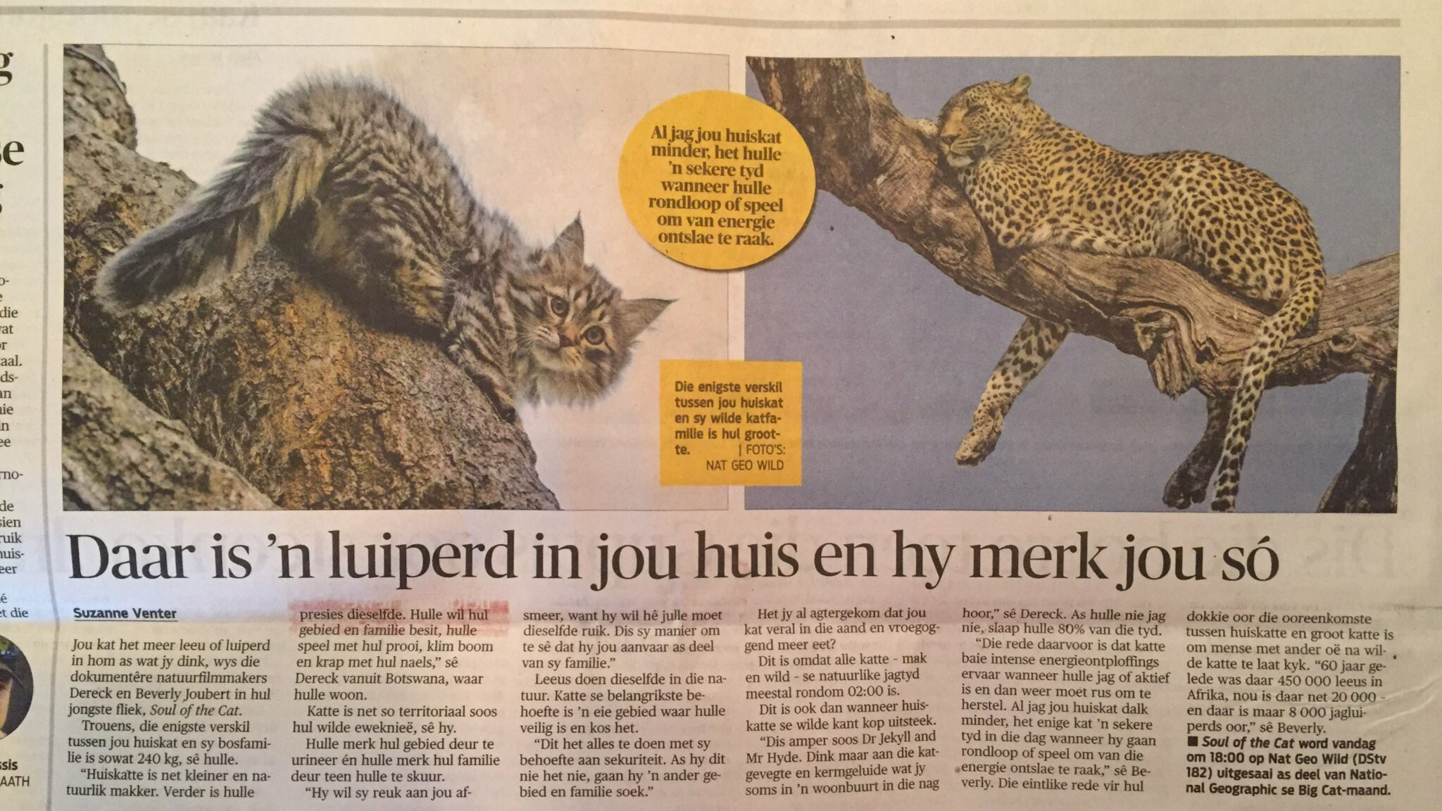 The greenhouse pr - Greenhouse Pr On Twitter Thank You Rapportsa Suzanneventer Incredible Interview With Dereckbeverly Re Soulofthecat Natgeoafrica 6pm Tonight