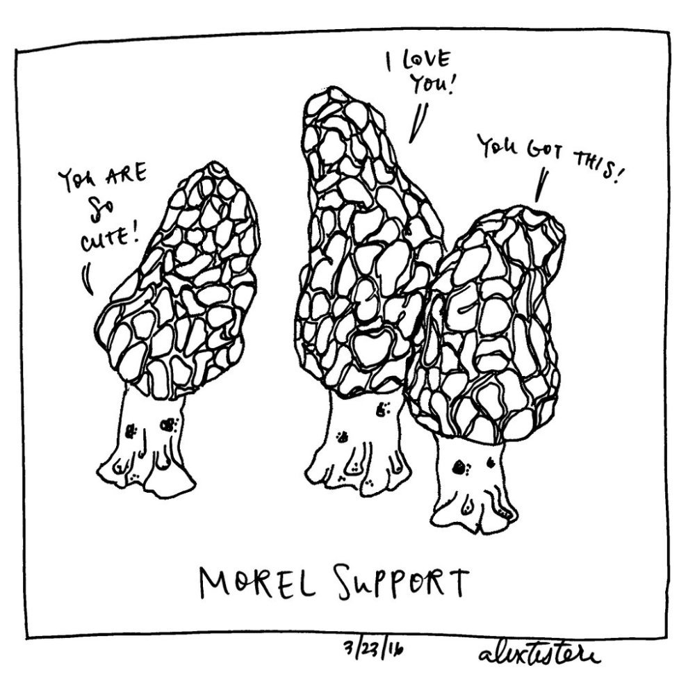 Morel support. We all need it! (Cartoon by @alextestere for @saveurmag) https://t.co/0xRK6NfnPB