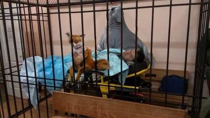 Рассмотрение отвода судьи по делу Насирова состоится в Соломенском суде в 10.30, - Антикоррупционная прокуратура - Цензор.НЕТ 5239