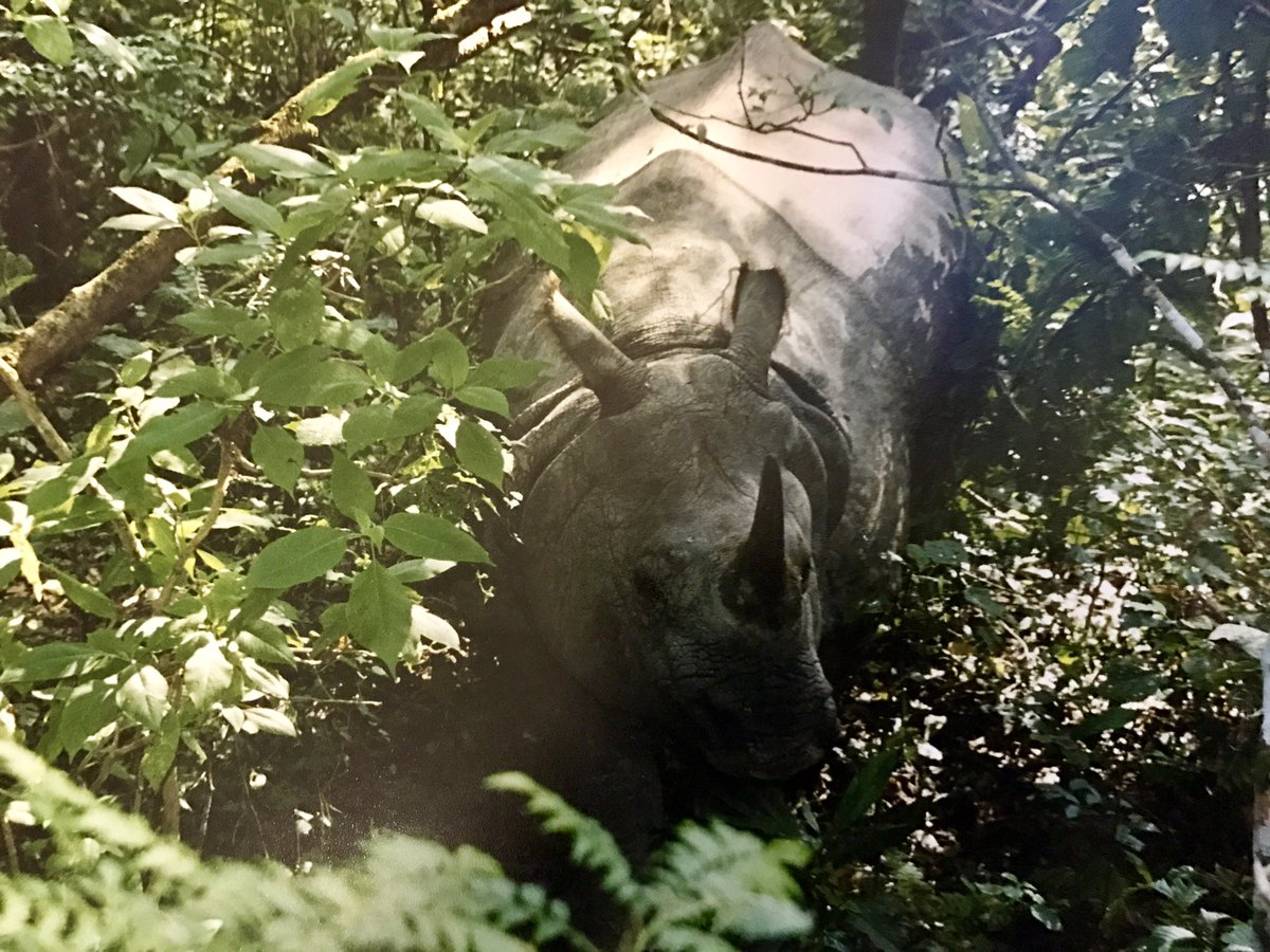 Tweets on #WorldWildlifeDay reminded me of my wildlife photography days @WWFNepal #OneHornedRhinoceros #ChitwanNationalPark #Throwback