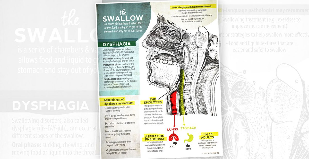 Slp Insights On Twitter Visualization Of Swallow Anatomy