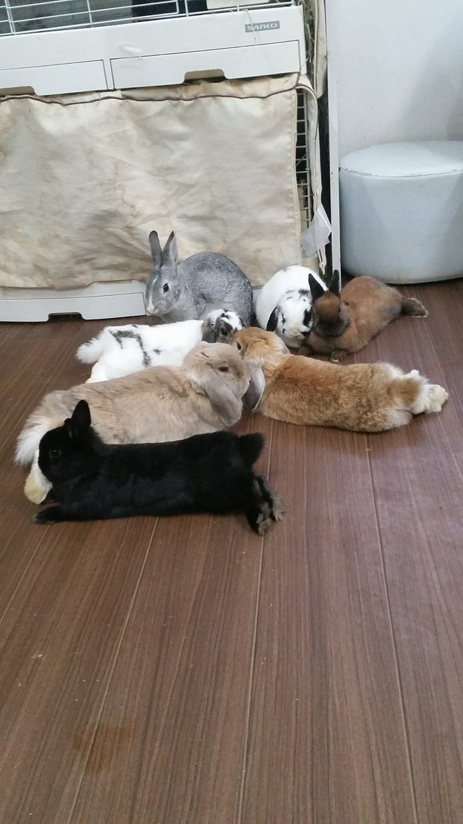 """rachelle on twitter: """"café de conejos en tokio, lugar de retiro en"""