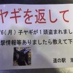 道の駅で窃盗事件が発生…盗まれたものは…なんと…黒い子ヤギ!?