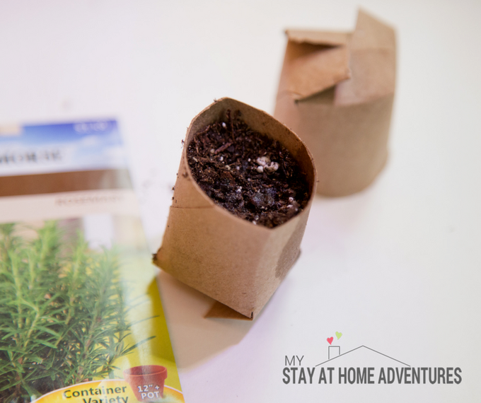How to Create Toilet Paper Seed Starter * My Stay At Home Adventures