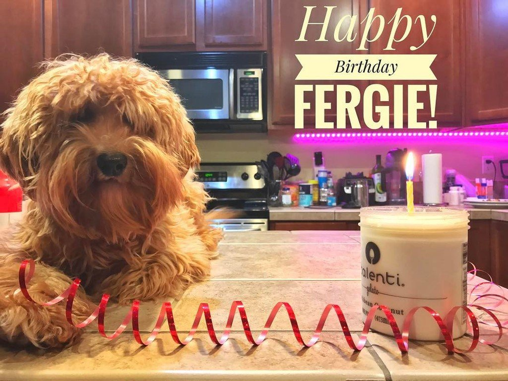 One year ago, right around 11pm Fergie joined our family! Happy 1st Birthday to Fergie and