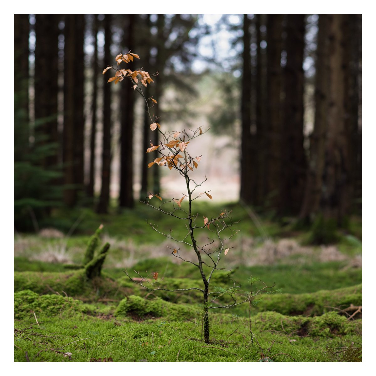 Or, for a calmer view of the woodlands, how about @HarperBPhotos' delightfully tranquil #WexMondays entry? https://t.co/QxarF1ovbv