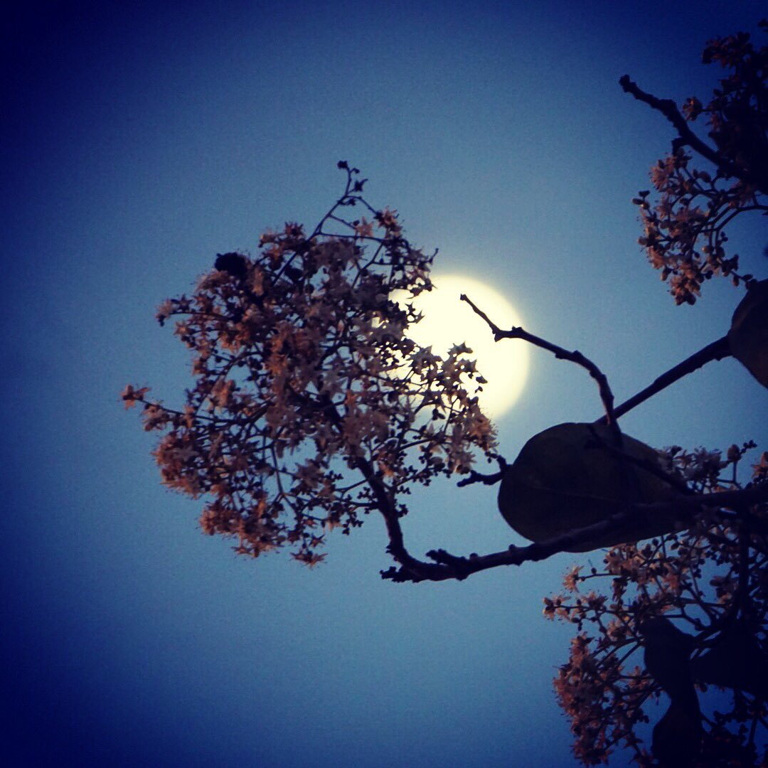 Nimish Dubey On Twitter The Moon Flowers A Branch Connaught Place