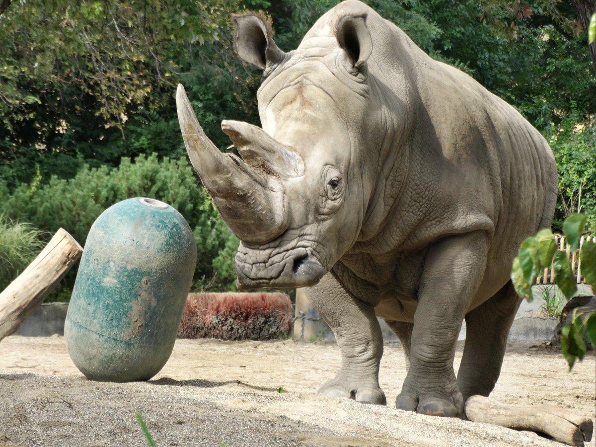 Detroit Zoo on Twitter: