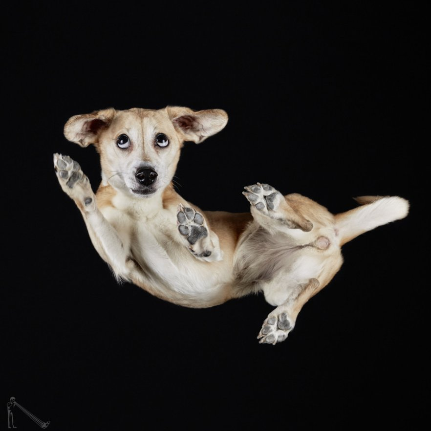 @AndriusBurba Under-dog project is one o...