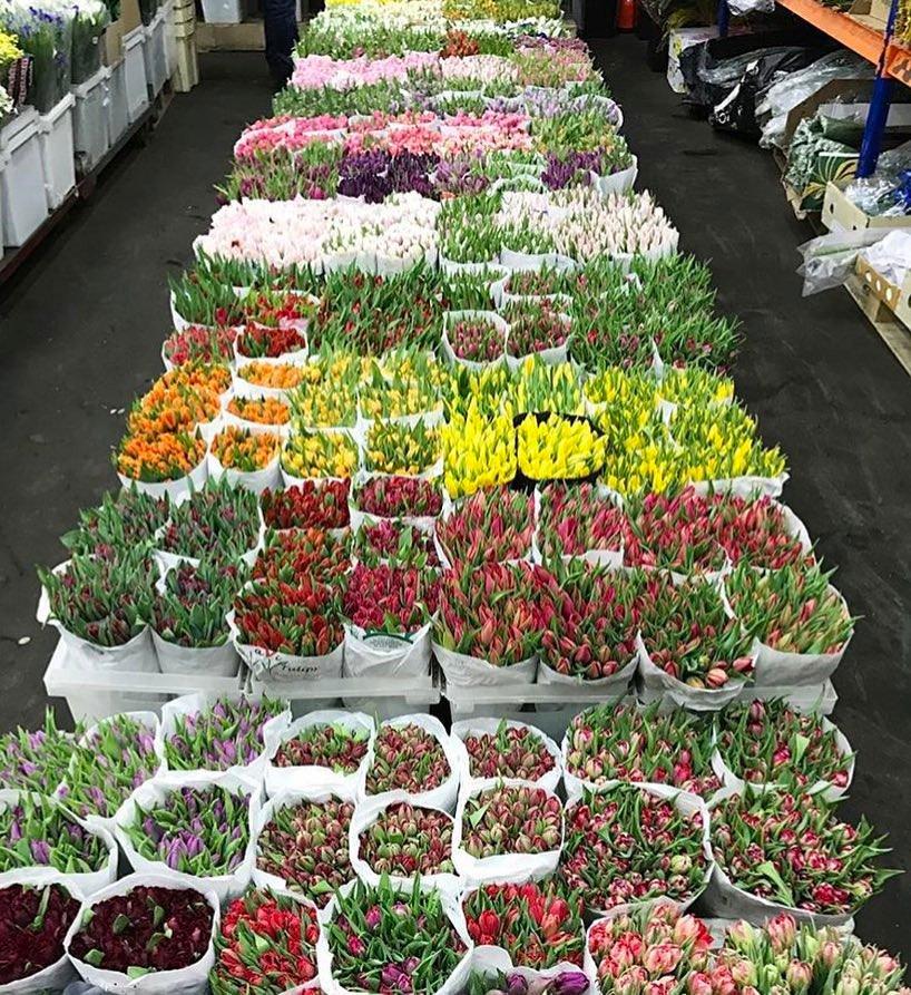 Свежие цветы, цветы оптом москва блэк баккара