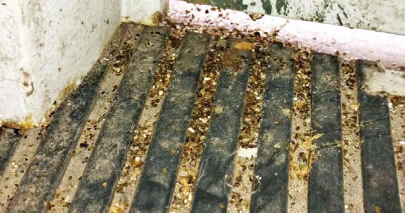 Ratas en jard n de infantes por matiresano for Ahuyentar ratas jardin