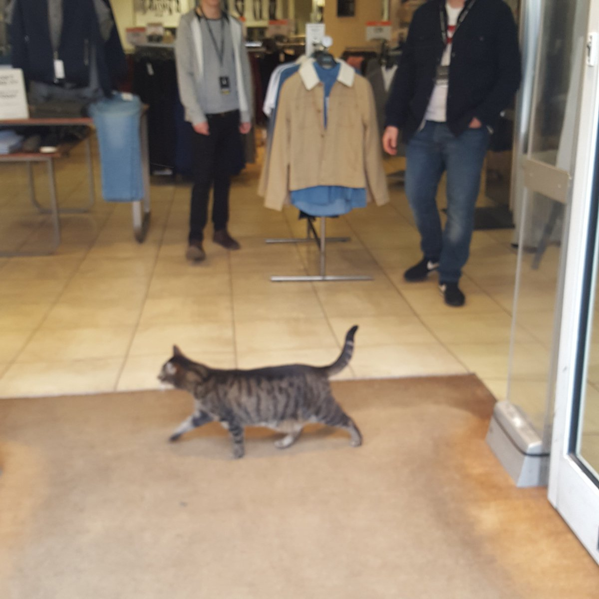 Anyone in #Bath know this cat? He's shopping in Burton at the moment. @WeLoveBath @BathEcho https://t.co/nJ692aXyzs