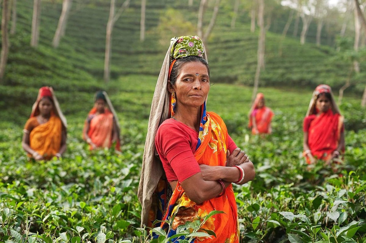 tea industry in bangladesh Tea industry is an essential industry in bangladesh, which brings a lot of foreign currency for bangladesh it is the cheapest, the most well-liked, refreshing non intoxicating widespread drinks tea was first cultivated in china at the same time it was also started to grown in southeast india.