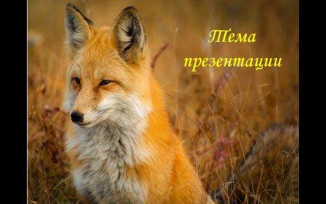Презентации животных красной книги