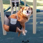 Meet Winston puppy stories