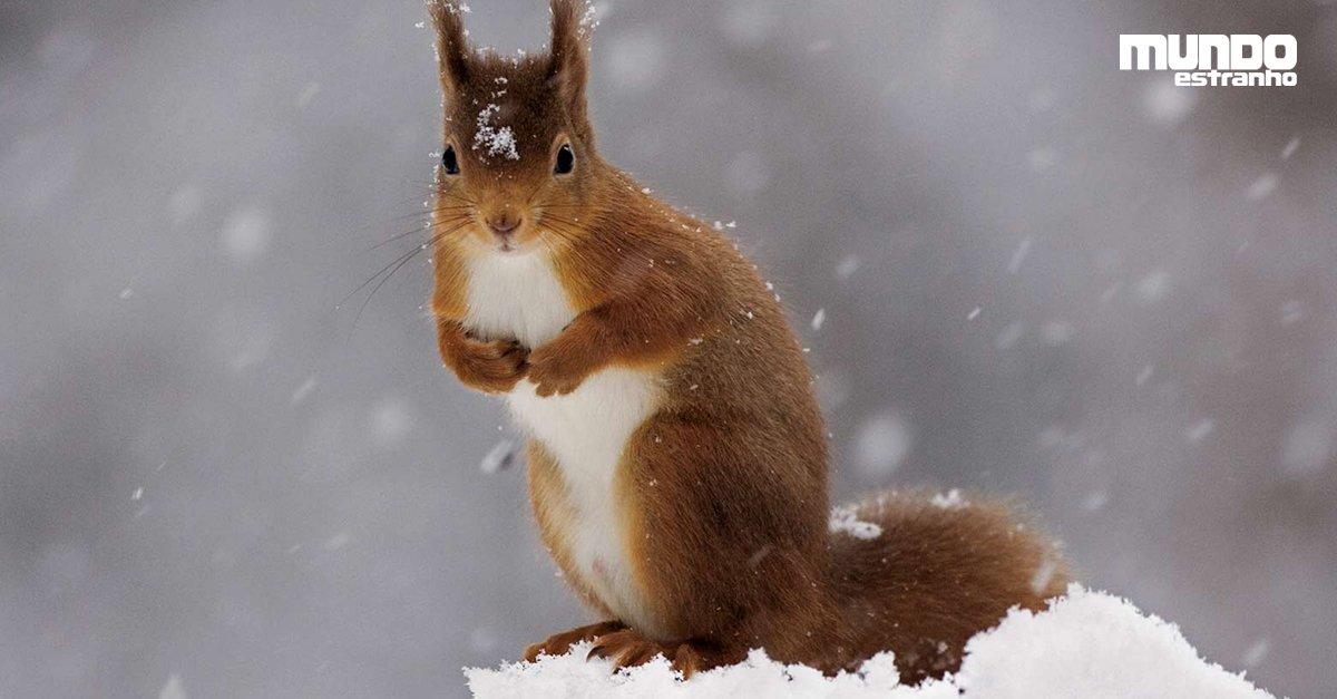 Esquilo encontra neve pela primeira vez https://t.co/cm4oZZI8z3 #BlogMeME
