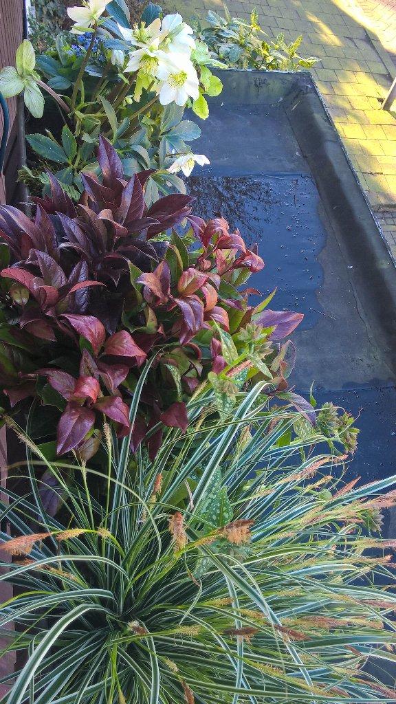Schaduwplanten bloembak