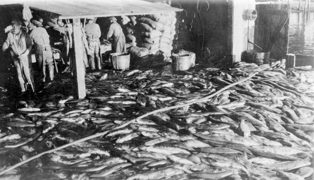 Using the rhetoric of conservation, canners blamed upriver Indigenous fishers for depletion, and lobbied govt for industry protection 6/ https://t.co/C5QN0ta59k