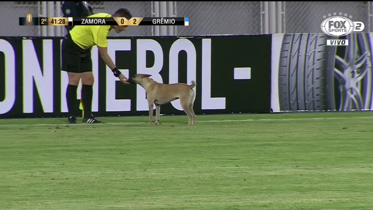 LIBERTADORES! Após fazer amizade com a arbitragem, cachorro é apelidado de 'corintiano' https://t.co/TFCPuVSnZU