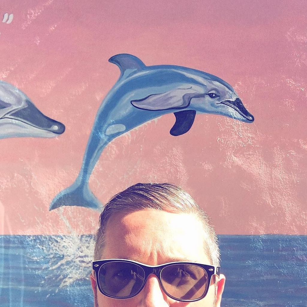 #PQlking #dolphins?  http:// ift.tt/2m8pvPn  &nbsp;  <br>http://pic.twitter.com/YtbcRw2bbp