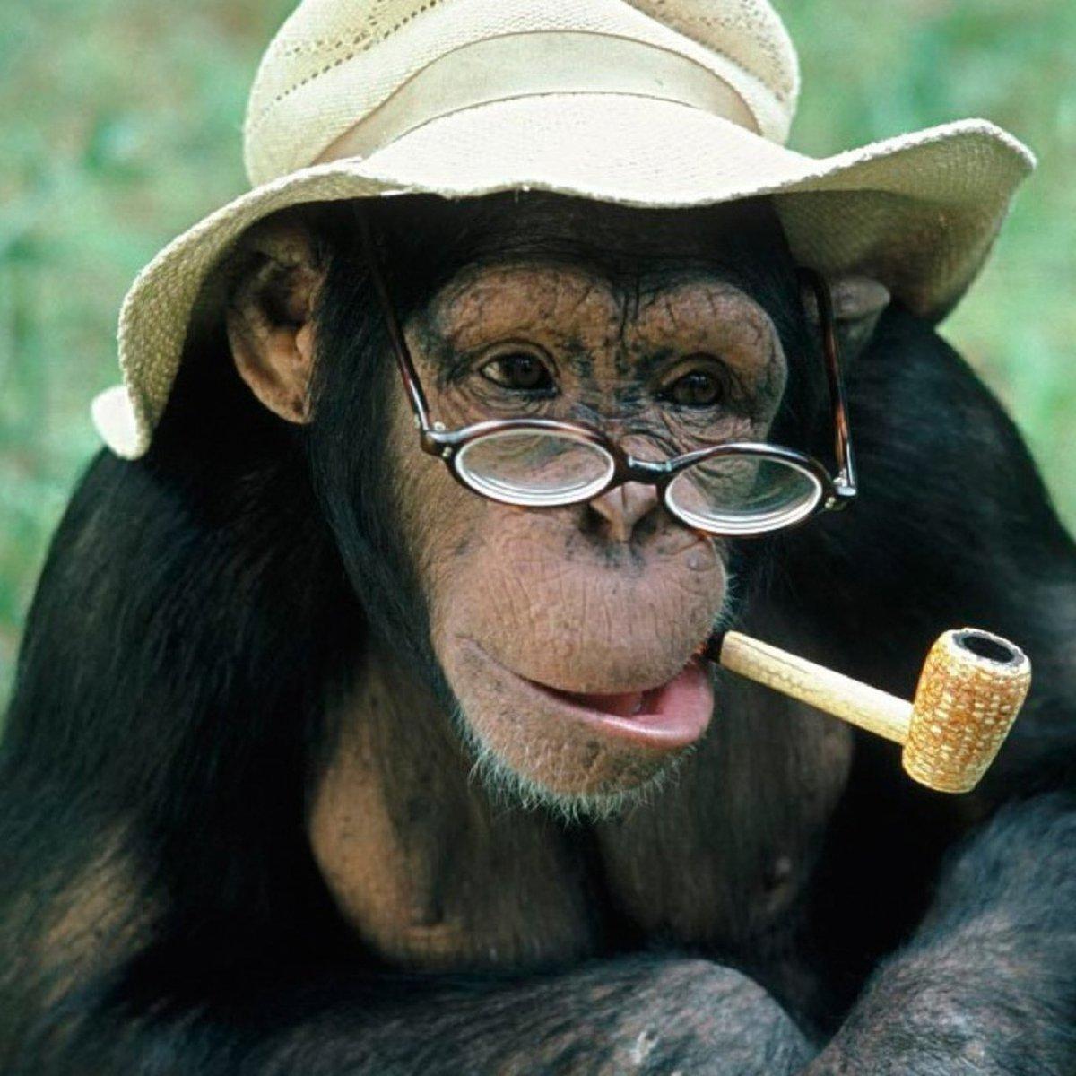Смешные картинки с сигаретой