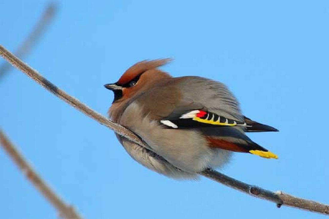 расчете птицы волгоградской области фото и названия предъявляемые обслуживающему персоналу