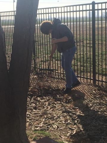 #Irons8thGraders Doing A Little Yard Work At Lubbock Supported Living Center  For #CommunityServiceDay Great Job! #WeSeeYou #rocksolidpic.twitter.com/ ...