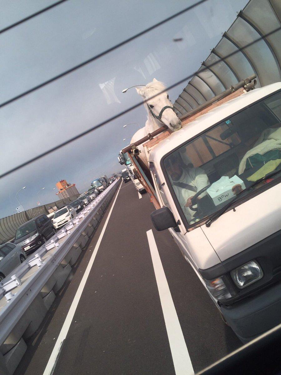 高速道路で後ろの車に白馬が乗ってた件について pic.twitter.com/EkmGks3vJN