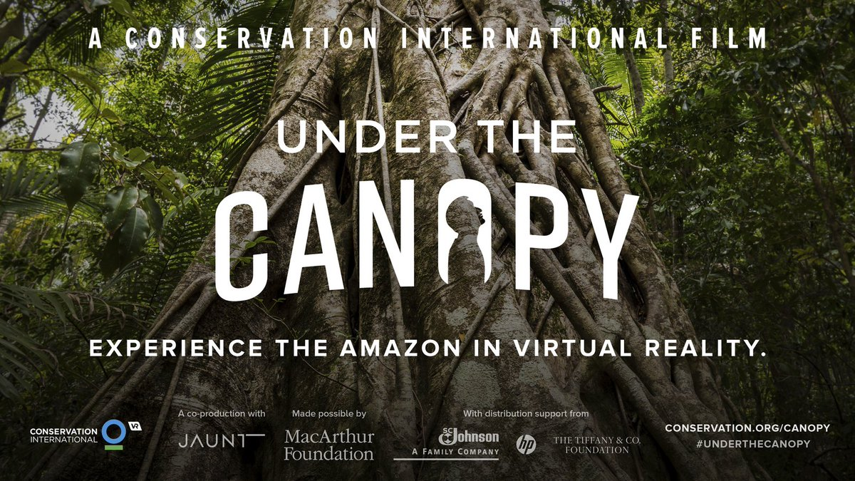Go Under the Canopy