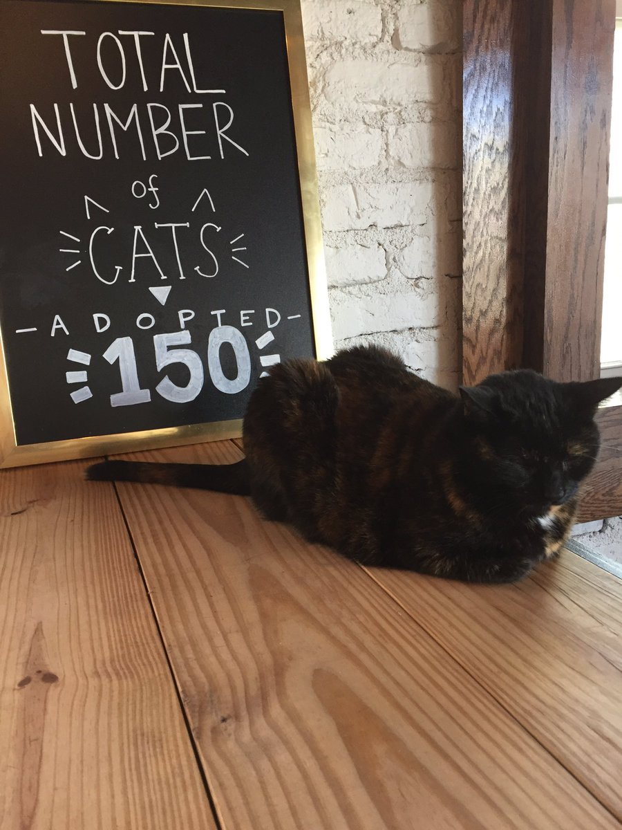 "pounce cat cafe on twitter: ""we're pawsitively overjoyed to"