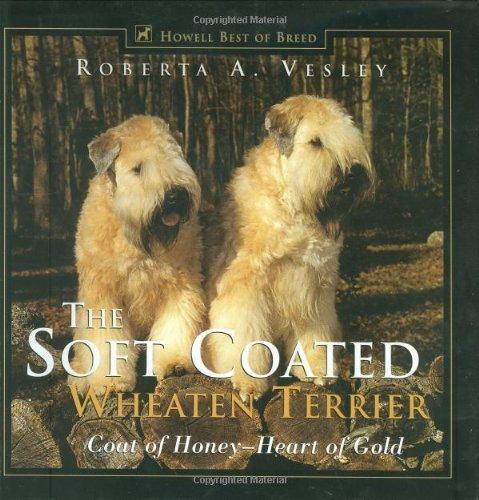 The Soft Coated Wheaten Terrier: Coat of Honey - Heart of Gold (Howell's Best of Breed Library) https://t.co/qFMbZ0redJ <-Click! #wheaten https://t.co/KZe4RlbJm0