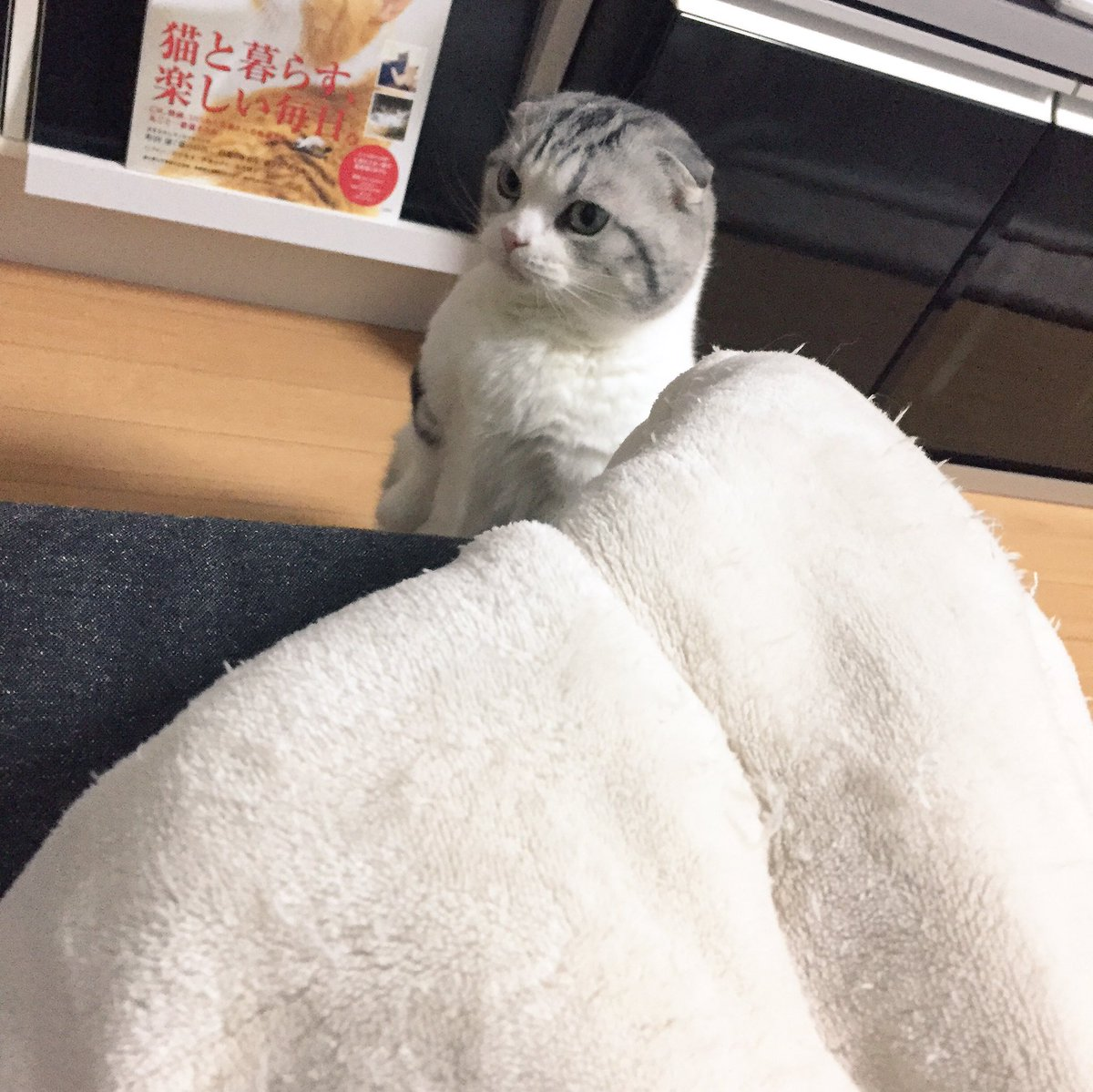 洗濯カゴの中で寝てたのに ゴハンの時間になったら 隣に来て待ってるまっぷーちん