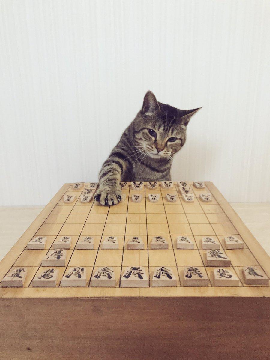 ライオン棋士