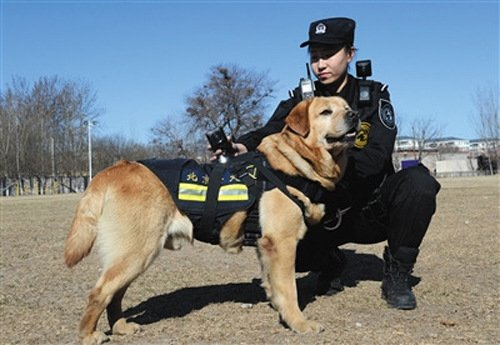 Chinese Police Dogs Are Now Using VR Cameras To Protect And Serve