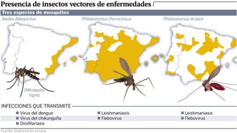 Los mosquitos, que pertenecen a climas más cálidos, están propagando enfermedades virales como Dengue, Chikungunya y Zika #microMOOCSEM2 https://t.co/p3qZjHbTI2