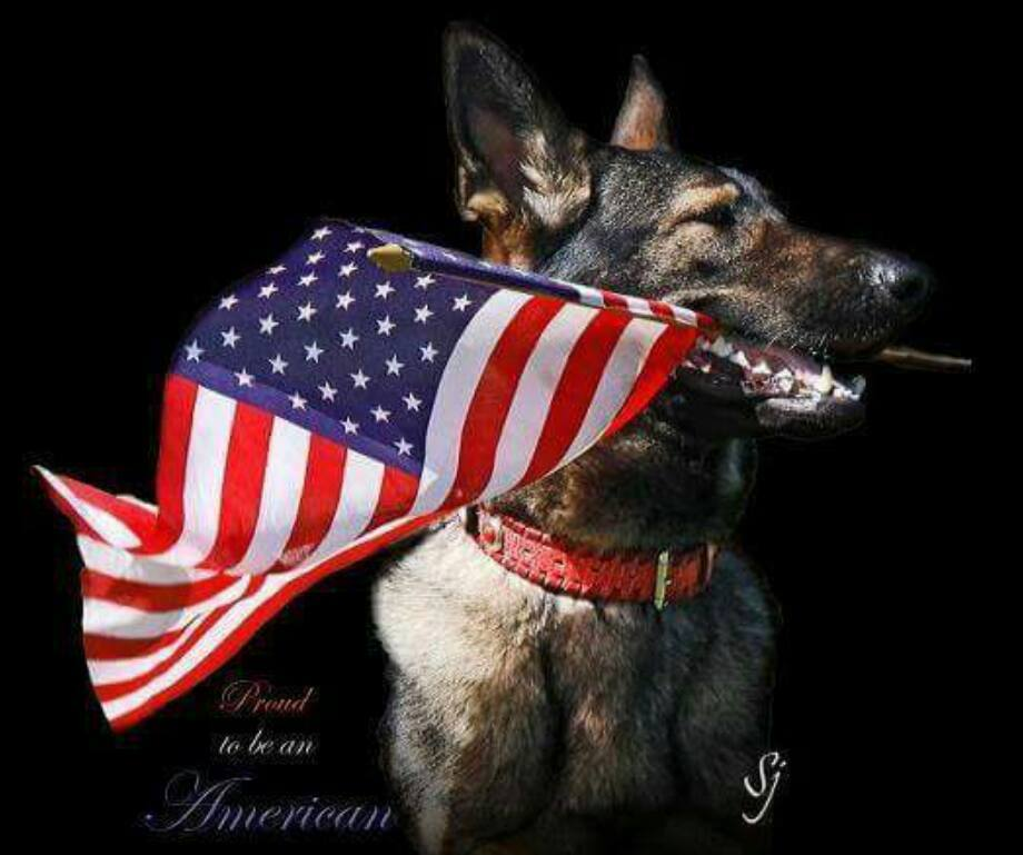 Today we recognize all the dogs who serve alongside our military! #K9VeteransDay https://t.co/GCeoBjTdhn