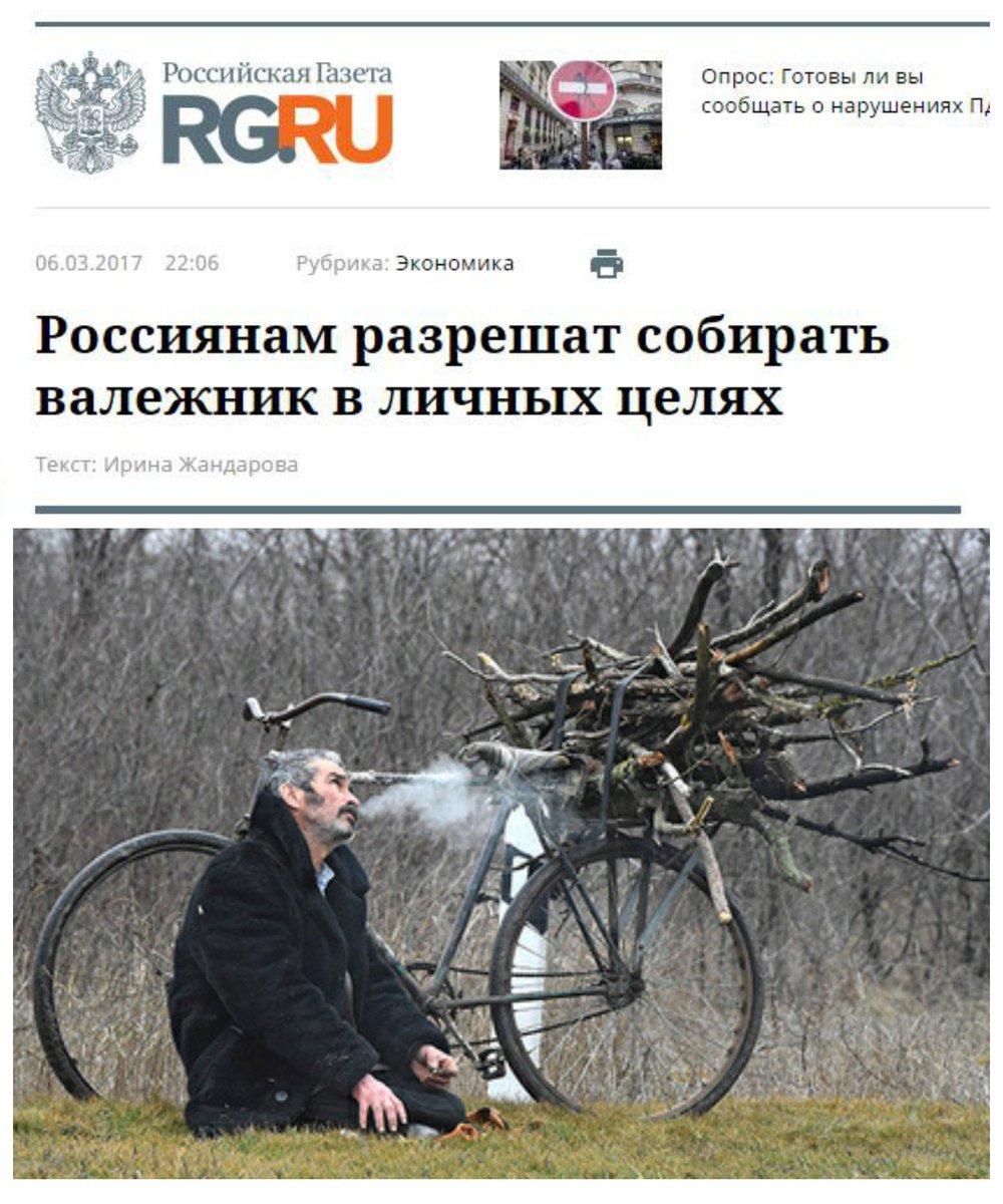 Россиянам разрешили собирать ветровал валежник