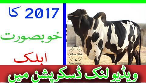 Bakra Mandi Pakistan on Twitter: