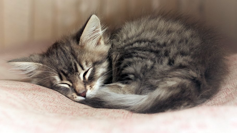 #nationalnappingday cats everywhere: we got this https://t.co/J3DCNBQy...