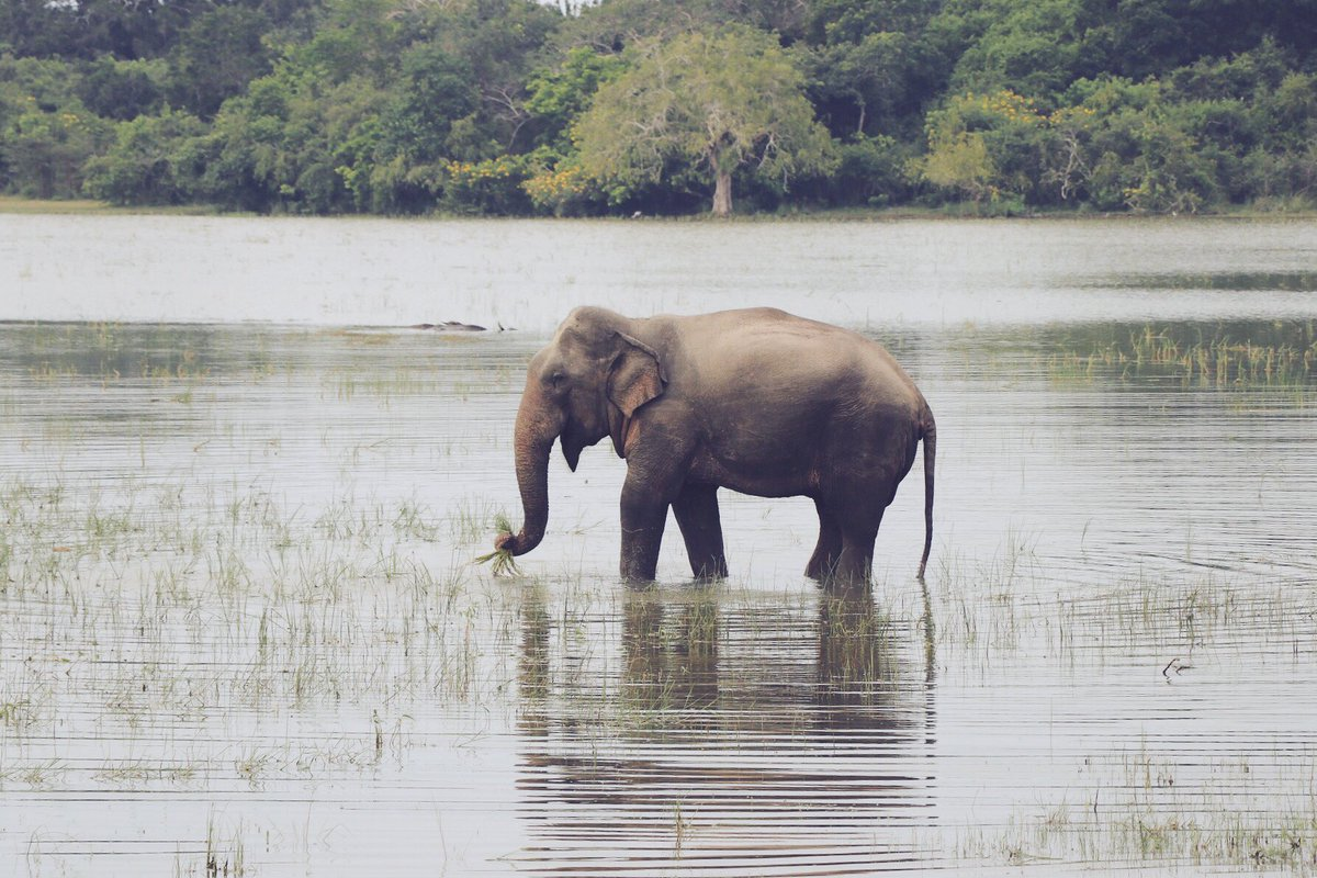 A few from yesterday&#39;s incredible #safari in #Kumana National Park with #Ecowave travels - check them out ecowavetravels.lk #srilanka <br>http://pic.twitter.com/TRu3N6nmM4