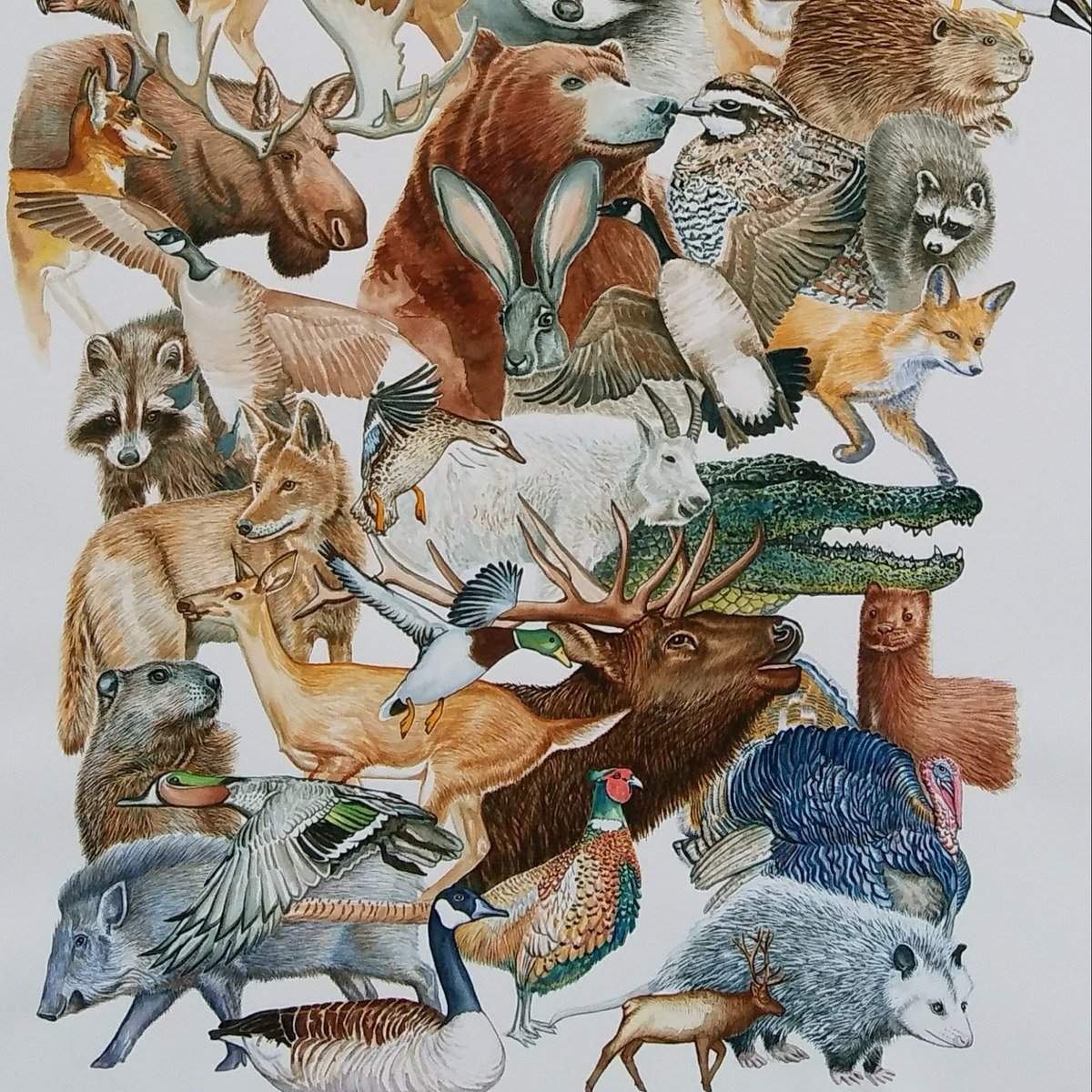 Image result for north american wildlife collage