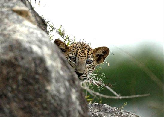 Yala National Park | Sri Lanka