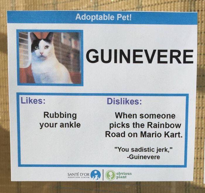 A pet adoption centre has the best dislikes for the cats.